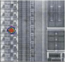 Applications of SOM - Nanolab Technologies